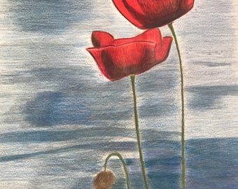Poppies by water in colored pencil