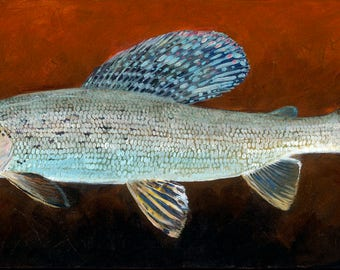 Shimmer Grayling, Giclee Print on Paper, Edition of 50