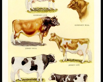 COWS Bulls Famous Dairy Breeds 1942 Vintage Kitchen Wall Decor Collage Art Supply Print Illustration Artwork Animal Cutouts Scrapbooking