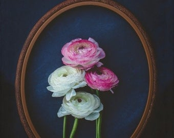 Fine Art Photo, Ranunculus Print, Flower Photograph, Pink, White, Oval Frame, Flower Art, Home Decor, Botanical Print, Floral, Still Life