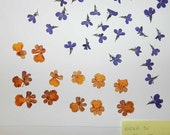 Real Pressed Dried Flowers over 35 items Small blue and Yellow/Orange Flowers Ready for your project Craft supply
