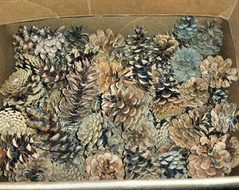 9 lb Box Of Natural Assorted Size Pinecones | Craft Supply | Rustic | Natural Decor