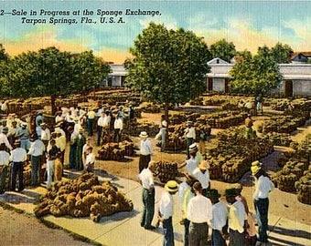 Vintage Florida Postcard - The Sponge Exchange in Tarpon Springs (Unused)