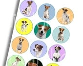 JACK RUSSELL TERRIER Craft Circles - Dog Puppy Instant Download Digital Printable-Bottlecaps Collage Sheet- DiY Print -3 sizes