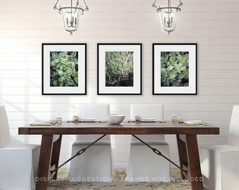 Green Kitchen Decor, Restaurant Decor, Garden Decor, Pictures of Herbs for Kitchen Artwork, Botanical Prints, Set of 3 Green Kitchen Herbs.