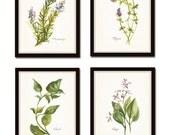 Watercolor Herbs Print Set No. 6, Botanical Prints, Giclee, Wall Art, Herb Prints, Kitchen Art, Botanical Print Set, Watercolor Art, Collage