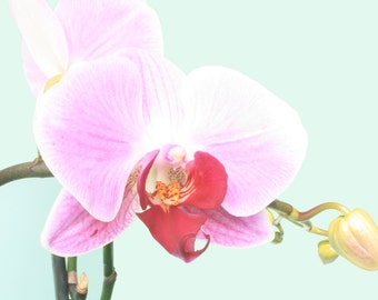 Orchid, Flower Photography, Flower Photo, Fine Art Print, Pink Flower, Floral Photography, Close Up, Studio