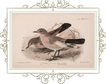 Digital Download of Our Original Victorian French Mat design with Antique bird print dated 1896