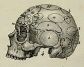 1841 Antique print of HUMAN ANATOMY: different parts of the body. Human Skull. Human head. 176 years old engraving