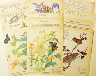 Nature Calendar Year Book Pages,  January - December, The Country Diary of an Edwardian Lady, Paper Ephemera, Junk Journals