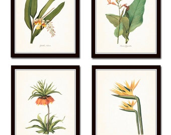 Tropical Botanicals Print Set No. 5, Giclee, Art, Prints, Antique Botanical Prints, Wall Art, Tropical Flower Prints, Coastal Art, Beach Art
