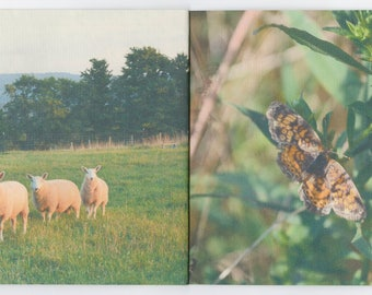 PASTURE artists book - photographs from nevermoor farm