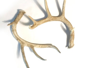 Pair of Large Real Deer Antlers, Set of 2