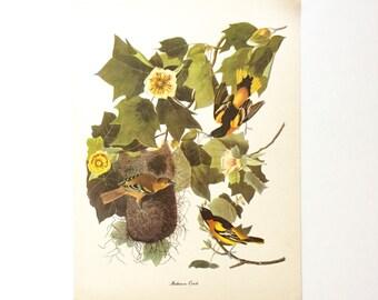 "Vintage John James Audubon Bird Print / Baltimore Oriole / Natural Science Home Decor / Art Illustration / Great for Framing / 9"" x 12"" Art"
