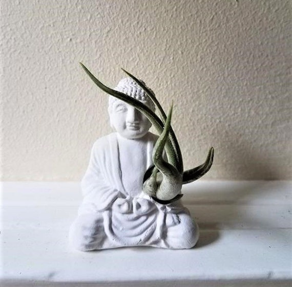 Buddha statue air plant holder, Buddha planter, small air plant holder, mini planter
