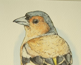 Chaffinch PRINT: A4 Print of an Original Mixed Media Chaffinch Illustration