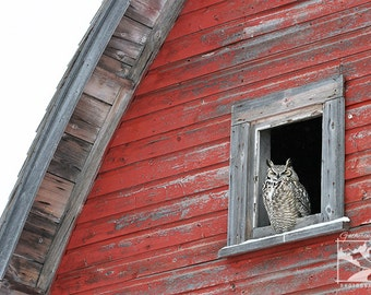 Great Horned Owl, Barn – Wildlife, Animal, Nature, Outdoor, Owl, Photograph, Home Décor, Wall Art, Picture, Prints, Canvas – Alberta, Canada