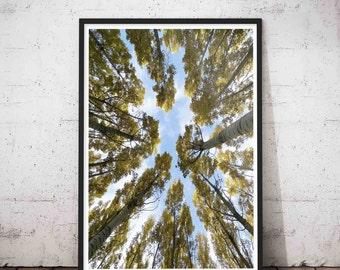 Woodlands Print Set, Tree Wall Decal, Rustic Tree Art, Woodland Wall Decal, Nursery Tree Decal, Family Tree Wall Art, Wall Decal Tree, Trees