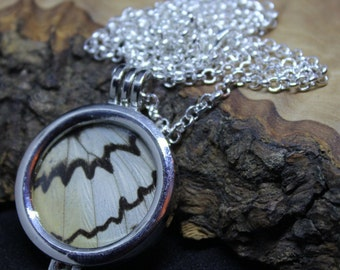 Real Butterfly Wing, encased in a double sided glass window memory locket, Pendant Necklace. *No butterflies harmed in the making*