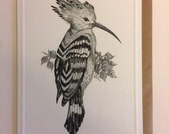 Hoopoe card