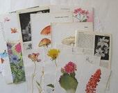 vintage flower & nature book pages - junk journal pages - vintage scrapbook cardmaking