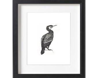 Little Black Cormorant Ink Drawing Print