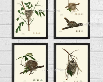 Bird Nest Print Set of 4 Beautiful Antique Forest Nature Tree Home Bedroom Living Room Hallway Staircase Office Room Wall Decor to Frame