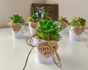 Succulent favor, Tin pail wedding favors, Perfect for weddings, Showers, Party, Succulents, Wedding Succulent Favors, potted succulents