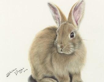 Bunny Print - bunny drawing, rabbit drawing, easter bunny, fluffy animal, animal decor, rabbit wall art, soft rabbit, soft bunny art