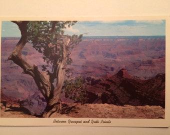 1963 Postcard Yavapai and Yaki Points Grand Canyon