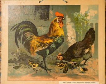 Vintage  Old Print on cardboard Chickens School Chart Lithograph