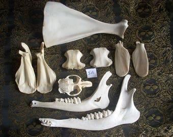 Small Animal Bone Assortment 5A
