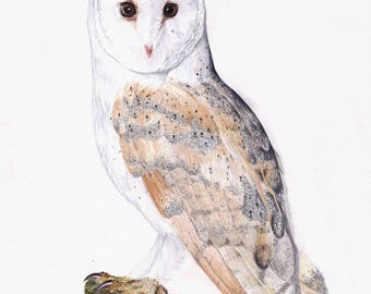 Barn Owl Fine Art Animal Giclee Print