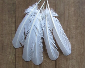 White Turkey Feathers