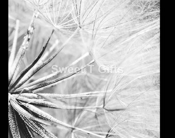 dandelion print, nature print, photography print, black and white printable, black and white photo, nature picture, nature photography