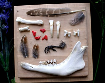 A set of bones and feathers of various types