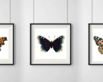 Butterfly print series, butterfly print, red butterfly, butterfly wall decor, butterfly wall print, set of 3, insect wall art, butterfly art