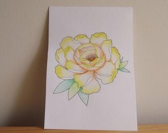 Peony Flower Watercolour Illustration