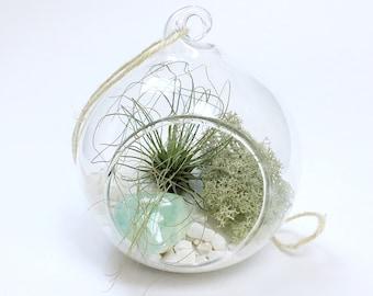 Pisces March Aquamarine Air Plant Garden Terrarium Kit • Tillandsia personalised gift present birthstone customise Birthday boho crys
