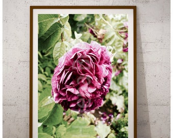 Rose Print, Purple Wall Art, Purple Wall Decor, Purple Decor, Purple Bathroom, Purple Bathroom Art, Purple Bathroom Decor, Rustic Flowers