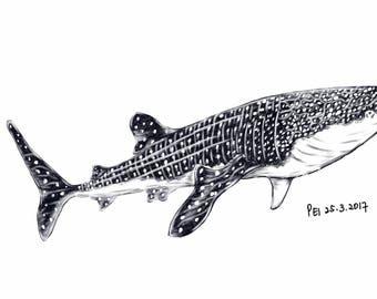Whaleshark on Bag