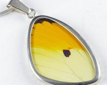 5.25cm Real Butterfly Wing Pendant in Sterling Silver - Jewelry Making Yellow Butterfly Pendant & Butterfly Necklace J785