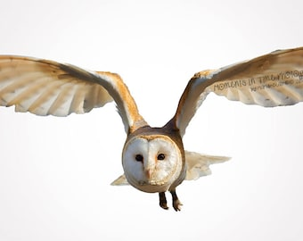 MIT Owl In Flight Digital Overlay
