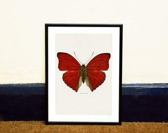 Red Butterfly Framed Insect Print
