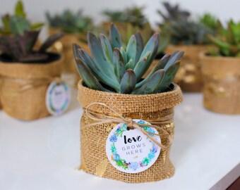 Gold Leaf, Succulent Favour, Bohemian wedding, boho, Mini Succulent, mini Succulent Planter, Burlap wedding, Hessian Wedding, Boho Wedding
