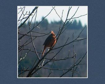 Cardinal - Matted Print