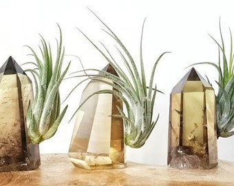 Tillandsia Air Plant and Smokey Citrine Crystal Tower
