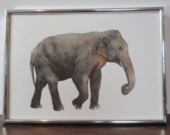 Elephant illustration print A4