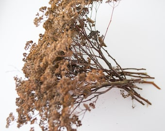 Winter dried flowers,dry branches, home decoration, interior decoration
