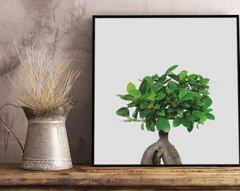 Bonsai I Artwork - Framed / Unframed canvas / Print - Botanic